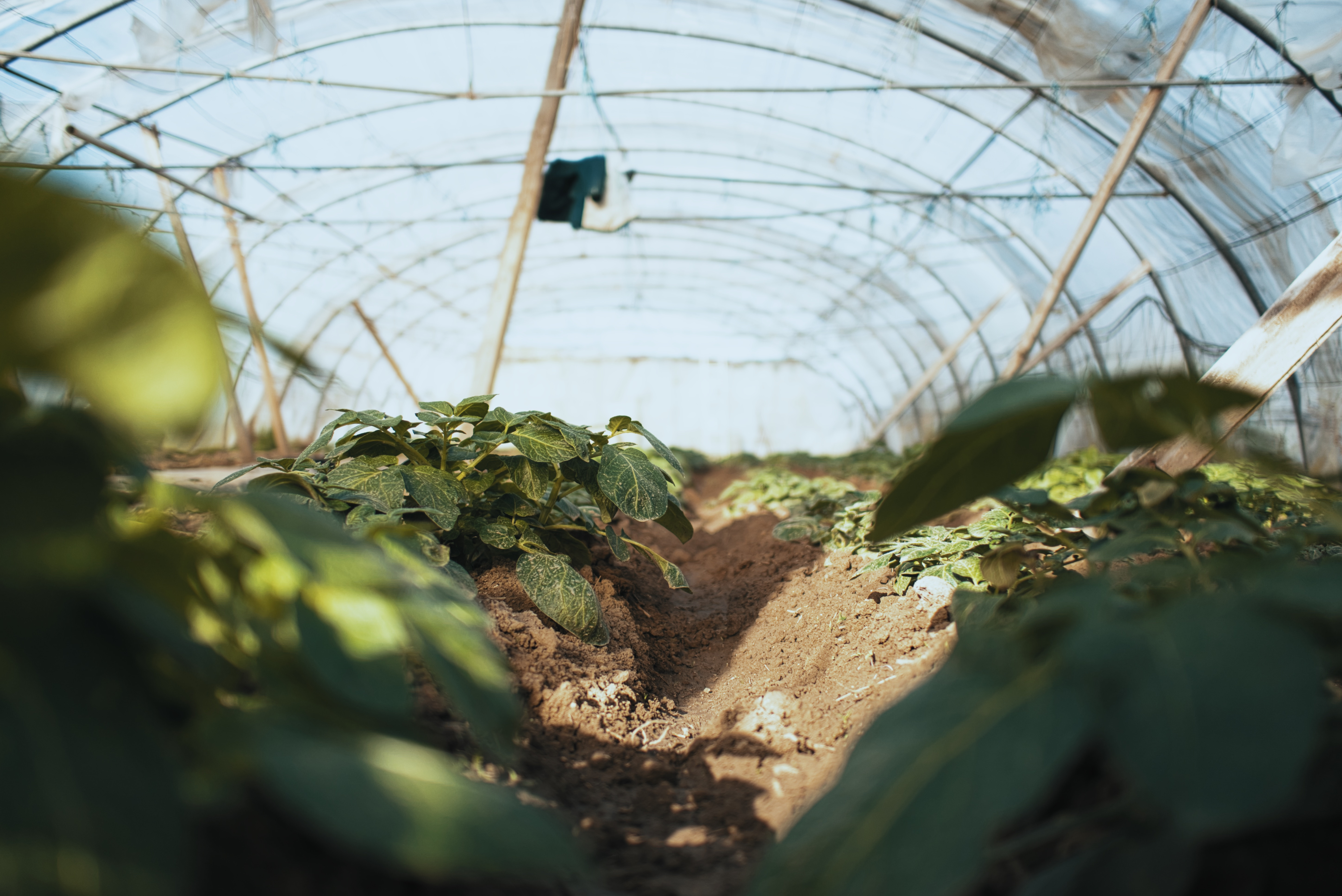 The Importance of the Movement Behind the 2020 Justice For Black Farmers Act