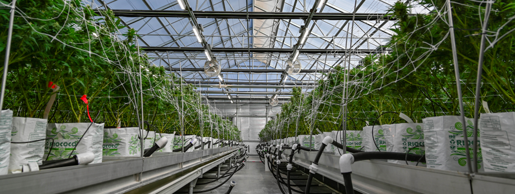 DLC Updates Horticultural Lighting Technical Requirements