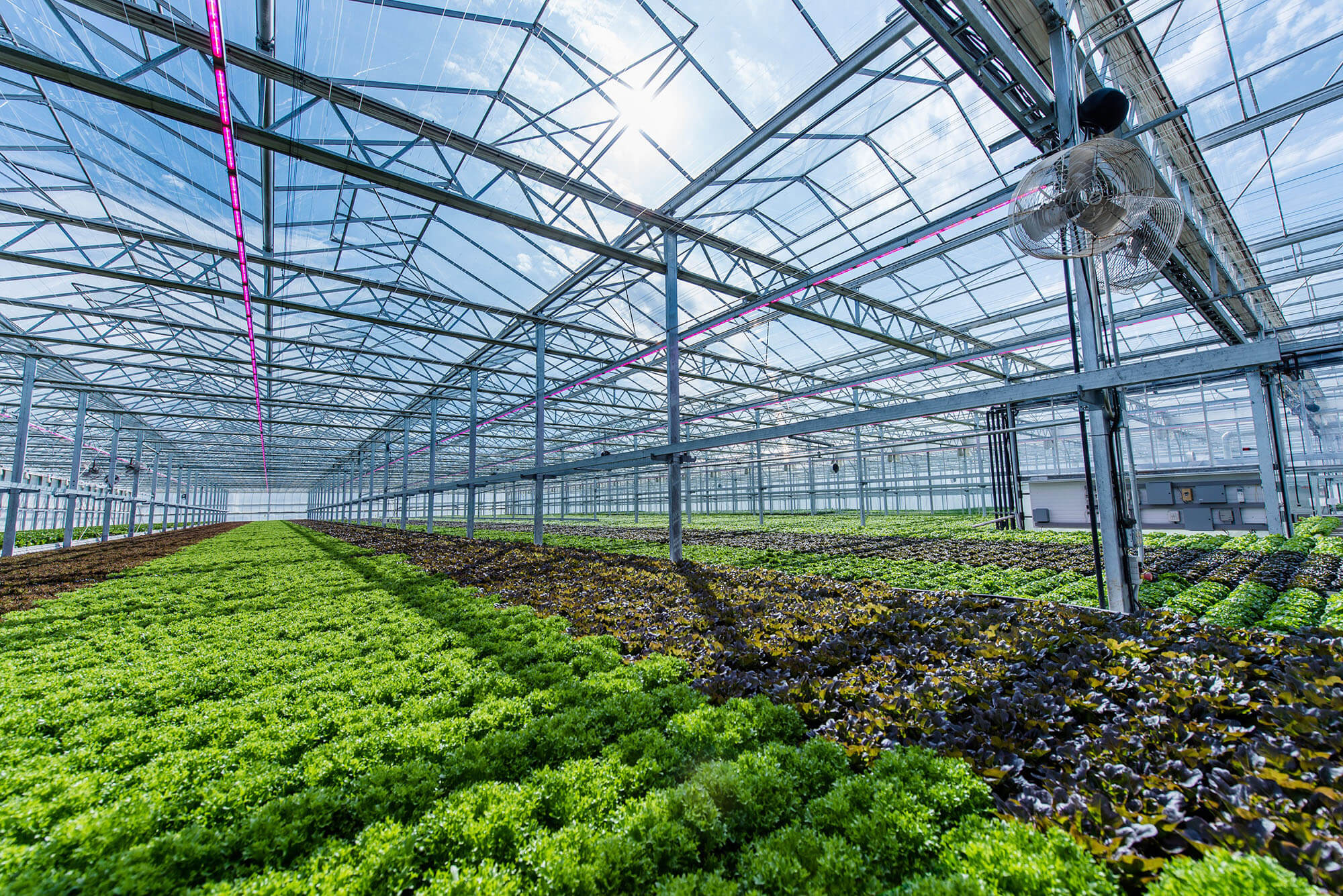 Leading CEA Producers Join RII as Pilot Partners for USDA-Funded Project